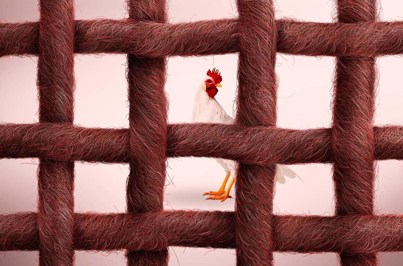 Marcelojr chicken ropes 1 5dac41e0 8ron