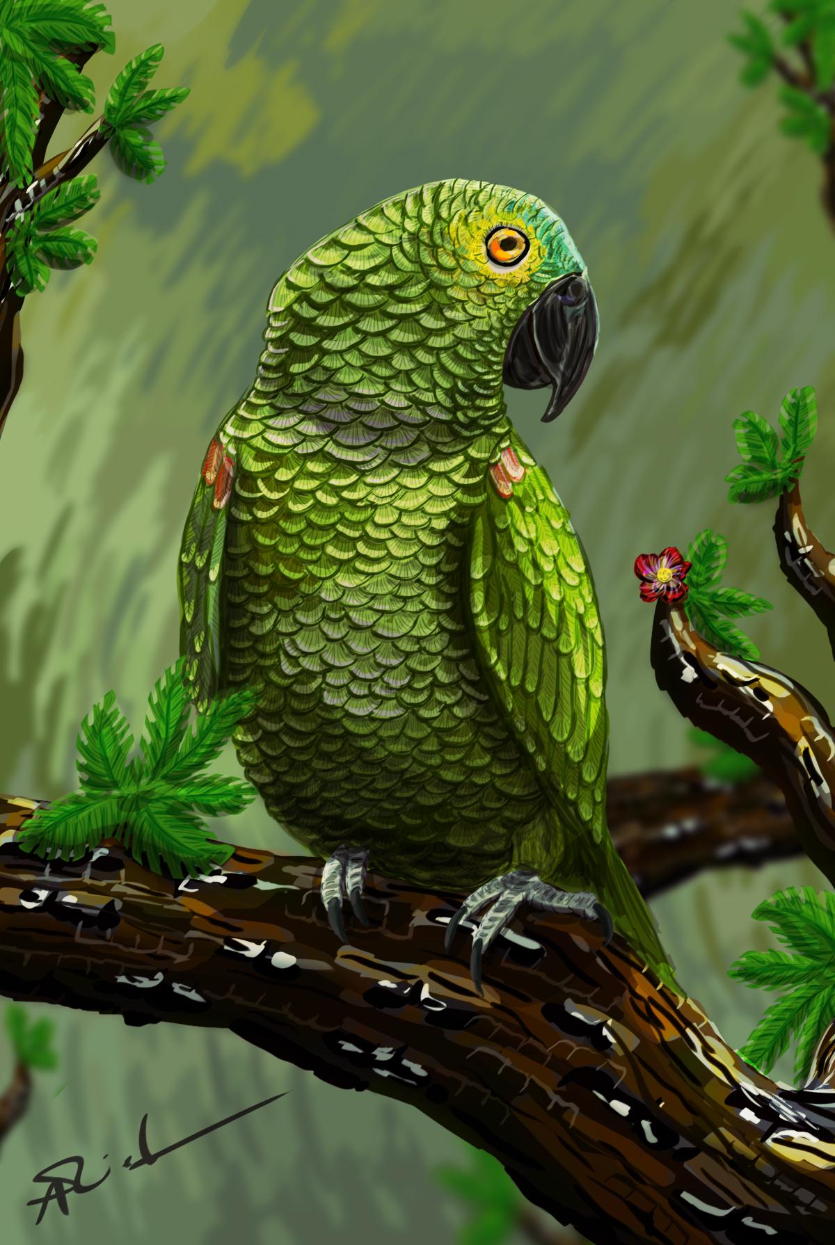 Stephanriederer kiko the parrot 1 2bc027f8 y5hk