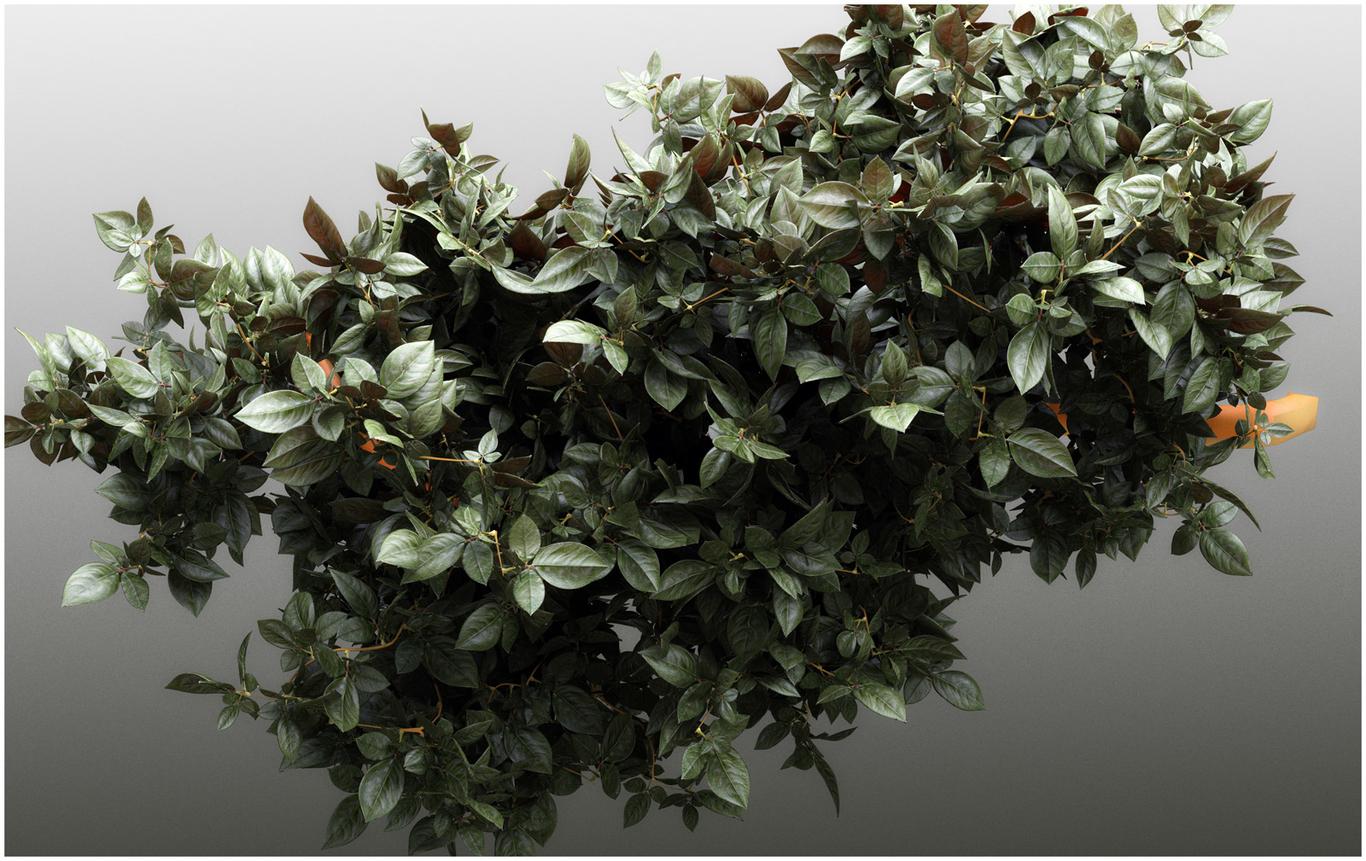 Titiber13 foliage by titi 1 f93c3ac7 9u13